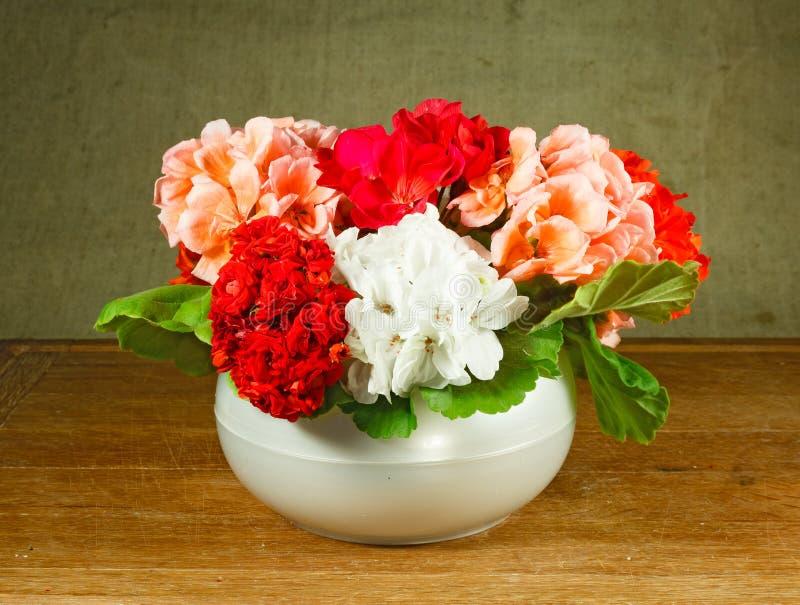 Pelargonium. Still life. Bouquet of flowers home royalty free stock image