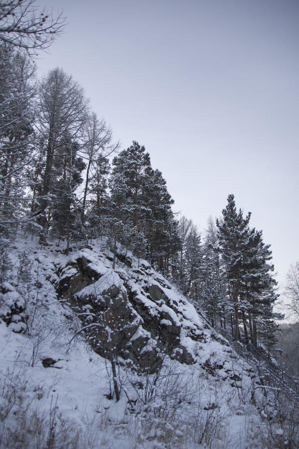 Pele-árvores em uma inclinação de montanha fotografia de stock