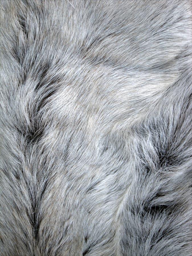 Pele animal cinzenta foto de stock royalty free