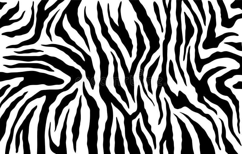 Pele da zebra, teste padrão das listras Cópia animal Fundo preto e branco Textura do vetor ilustração do vetor