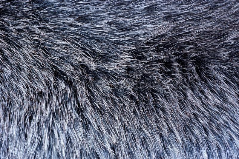 Pele de animais do pele-rolamento — peles bronzeadas com lãs Pele — o cabelo mamífero, protege das condições climáticas do invern imagens de stock royalty free