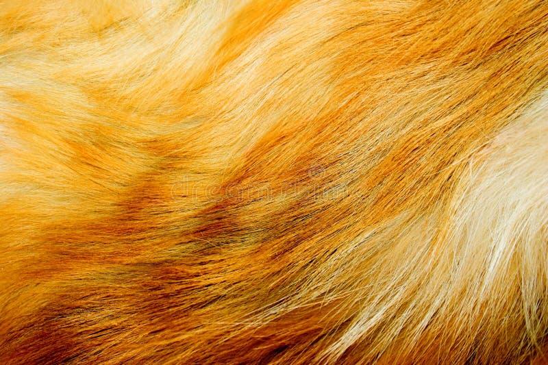 Pele de raposa vermelha fotografia de stock