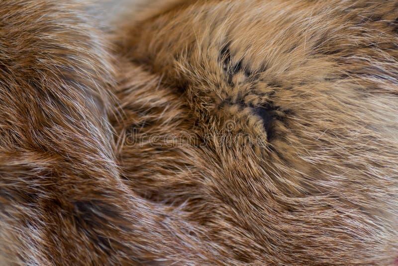 Pele de raposa vermelha elegante e luxuoso foto de stock royalty free