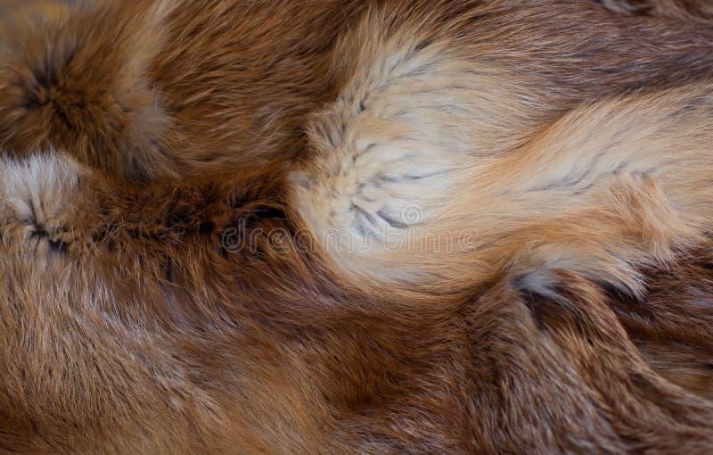Pele de raposa vermelha elegante e luxuoso imagem de stock