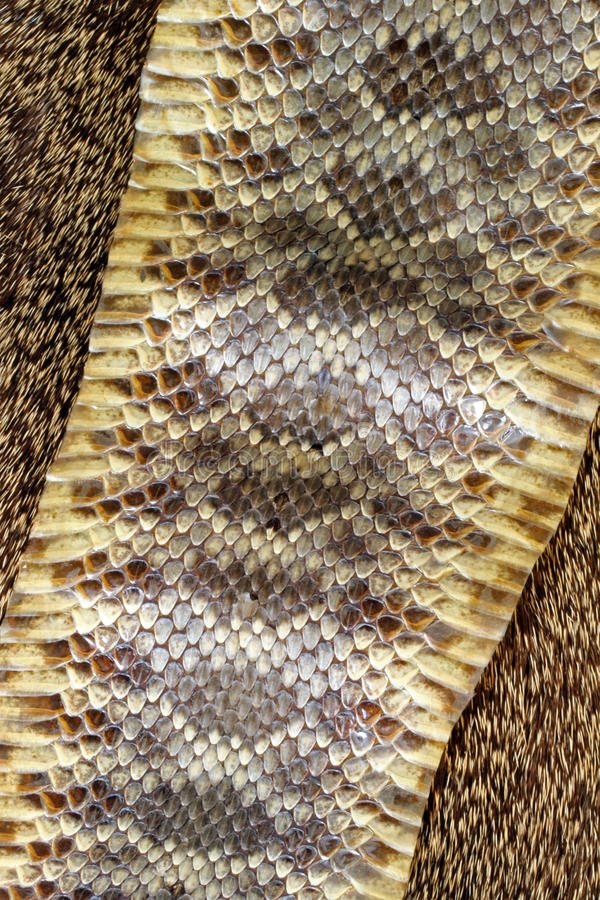 Pele de serpente fotografia de stock royalty free