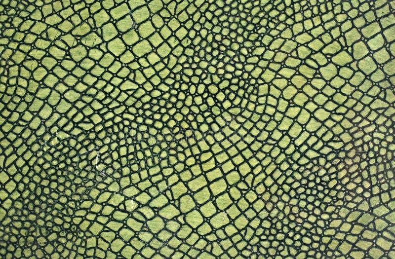 Pele de serpente verde imagens de stock
