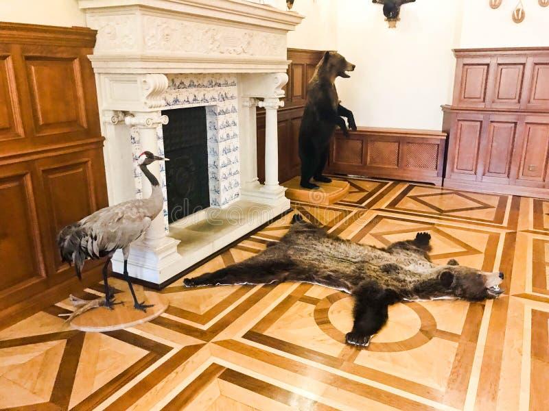 A pele de um urso marrom matado do urso e de uns pássaros enchidos, caçando troféus perto da chaminé foto de stock royalty free