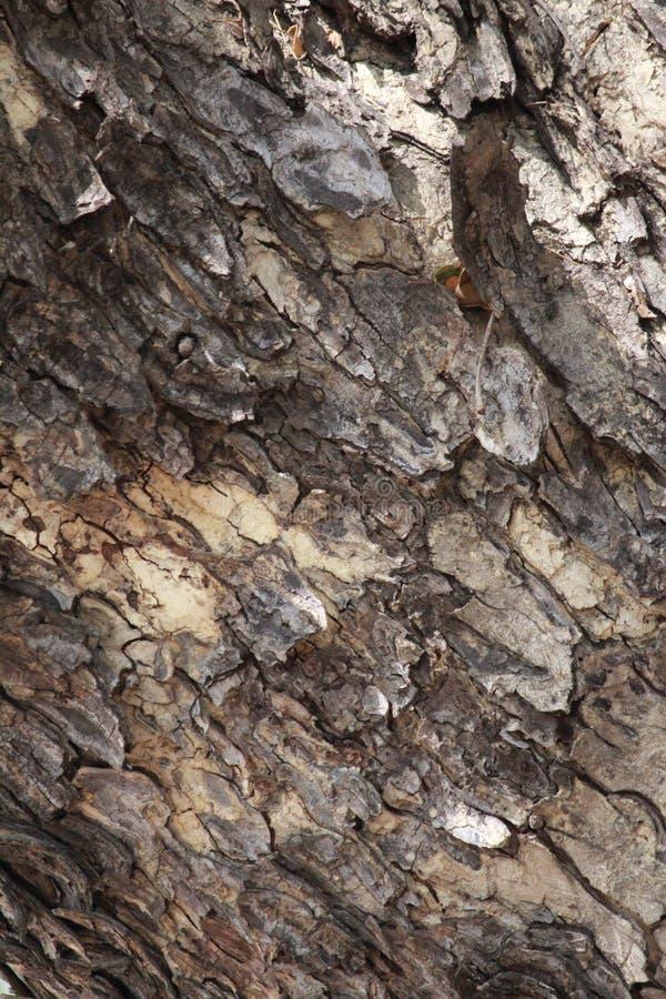 Pele de uma árvore fotografia de stock