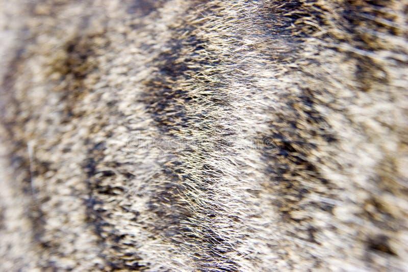 Pele do close-up do gato imagens de stock royalty free