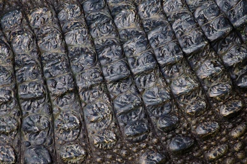 Pele do crocodilo vivo imagem de stock