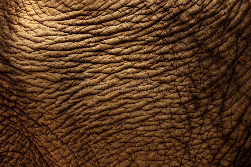 Pele do elefante foto de stock royalty free