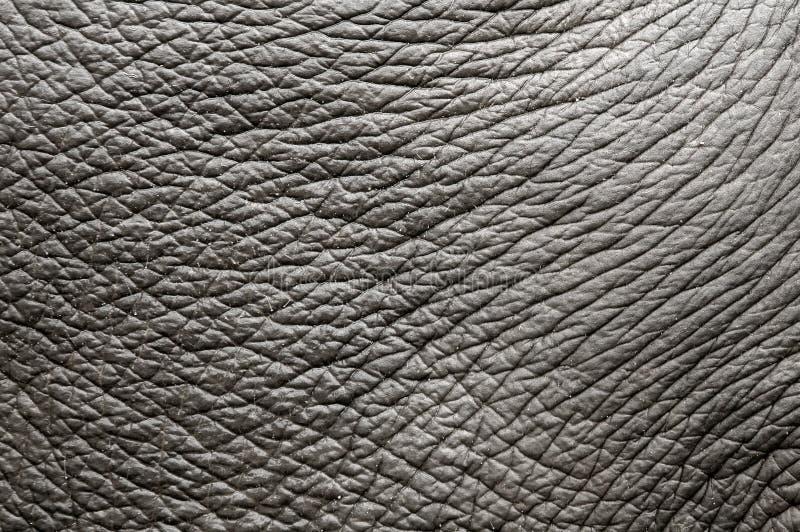 Pele do elefante fotografia de stock