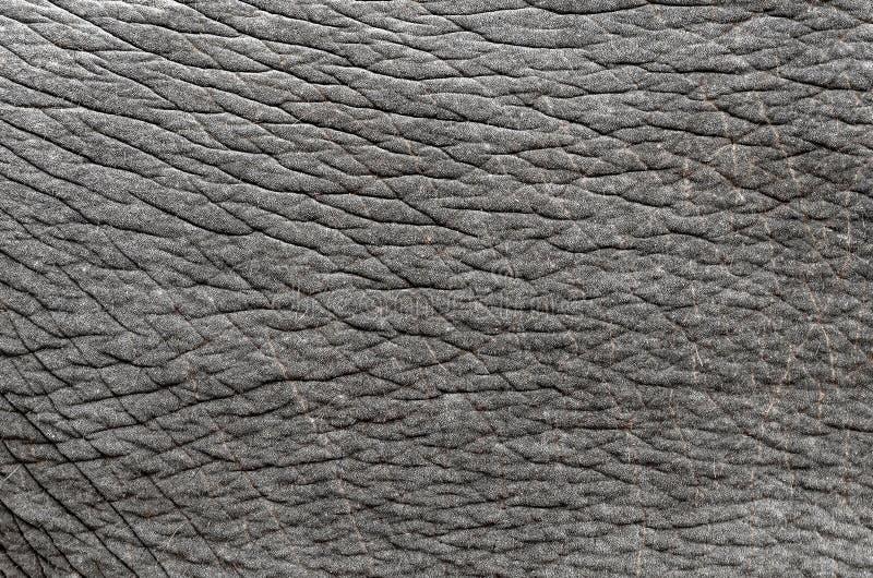 Pele do elefante foto de stock