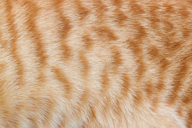 Pele do gato do gengibre para a textura ou os fundos imagens de stock royalty free