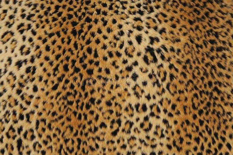 Pele do leopardo foto de stock