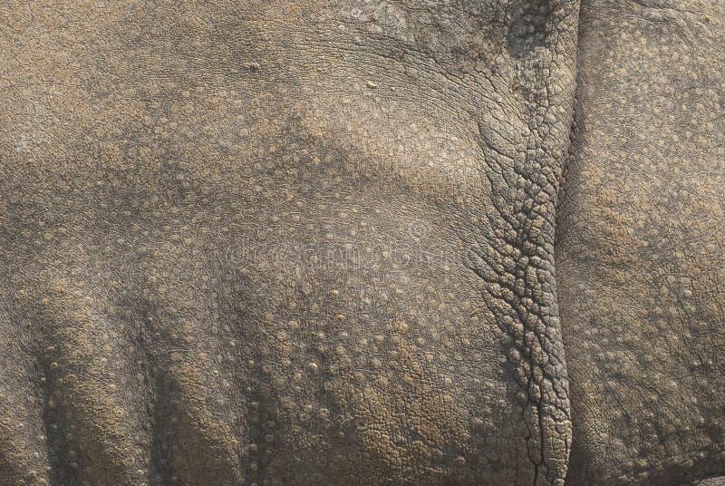 Pele do rinoceronte foto de stock royalty free