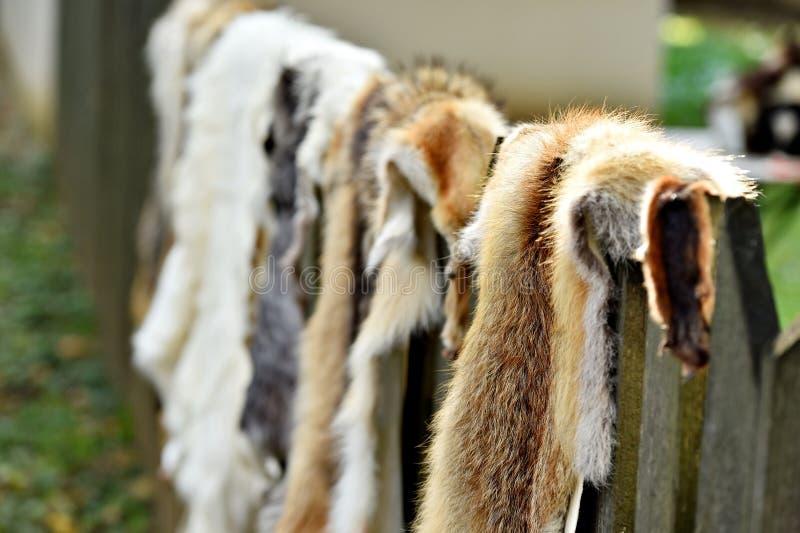 Pele dos animais para a roupa em uma cerca de madeira imagens de stock royalty free