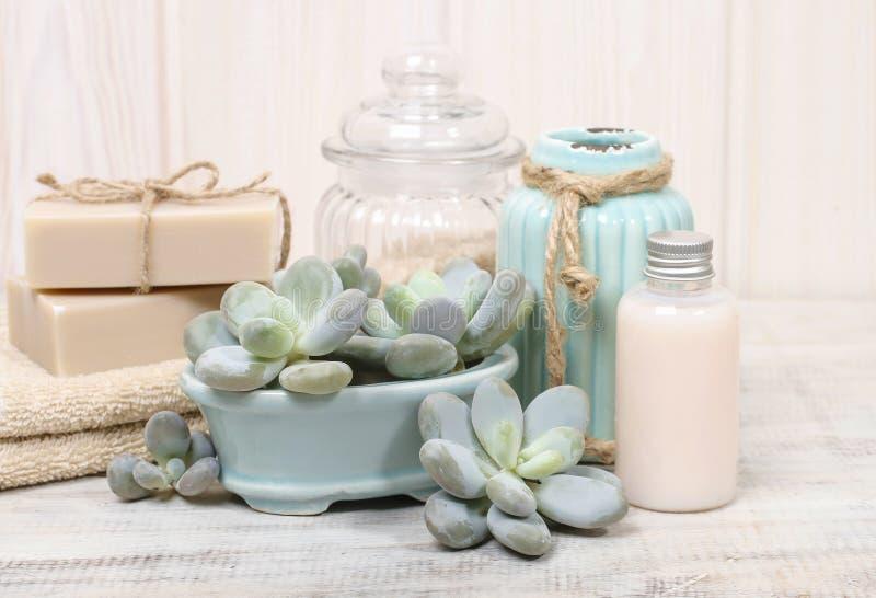 Pele seca hidratando: grupo de cosméticos e de plantas suculentos foto de stock royalty free