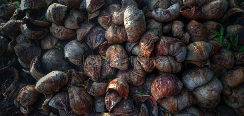 Pele velha do coco de Bali imagens de stock royalty free
