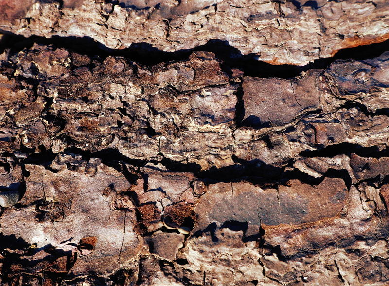Pele velha do marrom da árvore da textura do fundo da madeira de pinho fotografia de stock royalty free