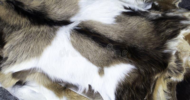 Peles animais naturais imagem de stock