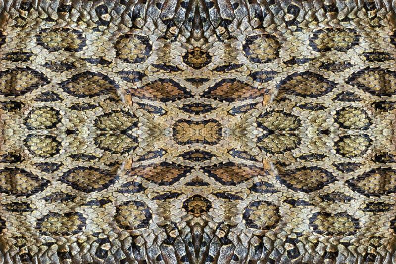 Peles da serpente imagens de stock