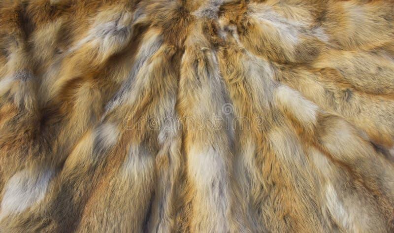 Peles do Fox foto de stock