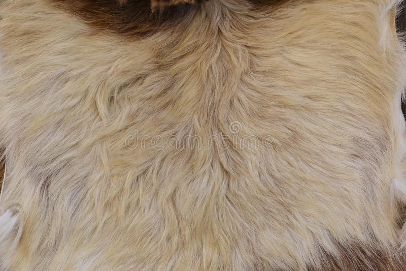 Peles dos carneiros na venda na vila Lahij- Azerbaijão imagem de stock royalty free
