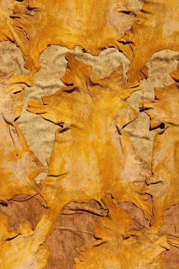 Peles tingidas da cabra foto de stock royalty free