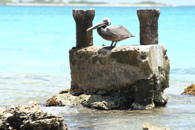 Pelican by the beach stock photo
