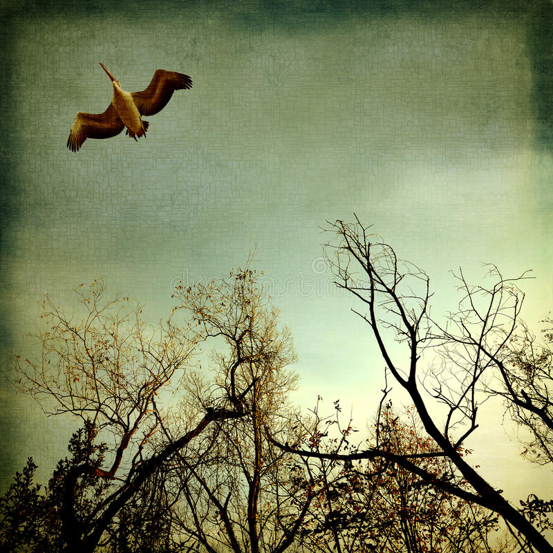 Pelican flying on the trees royalty free illustration