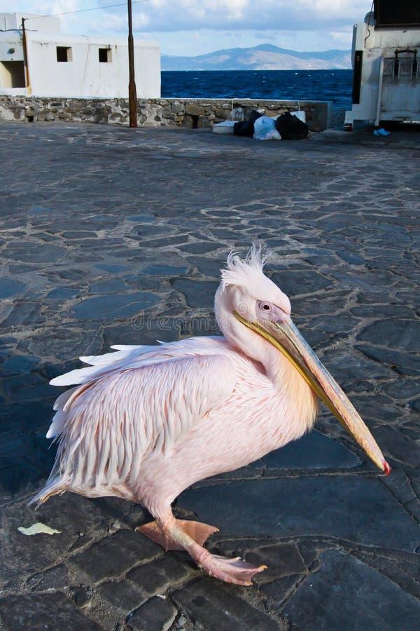 Download Pelican in Greece stock image. Image of bird, nobody - 25143879