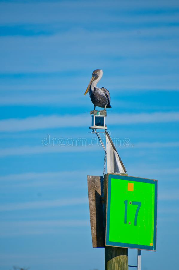 Pelican on Marker 17 royalty free stock photography