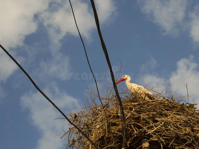 A pelican nest on wires stock image image of turkish 104494405 download a pelican nest on wires stock image image of turkish 104494405 publicscrutiny Gallery