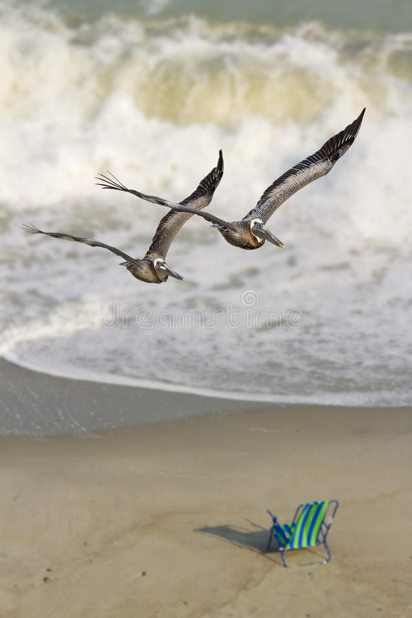 Free Pelican Pair, Ocean Surf, And Chair Royalty Free Stock Photos - 20315898