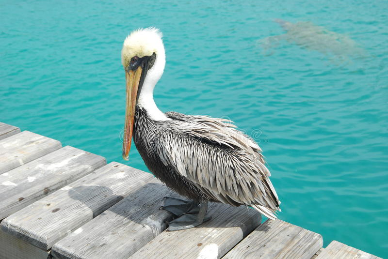 Pelican. A pelican resting on a fishing pier at the sea stock photos