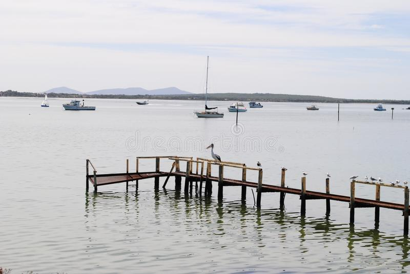 Pelican resting on jetty stock photography