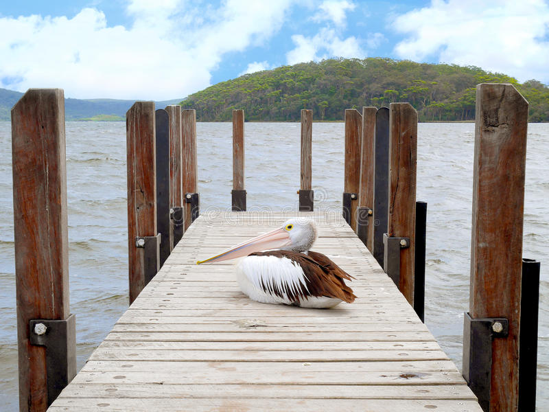 Pelican sitting on jetty stock image