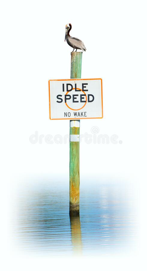 Free Pelican Sitting On A IDLE SPEED NO WAKE Sign Isolated On A White Background Royalty Free Stock Photography - 175882737