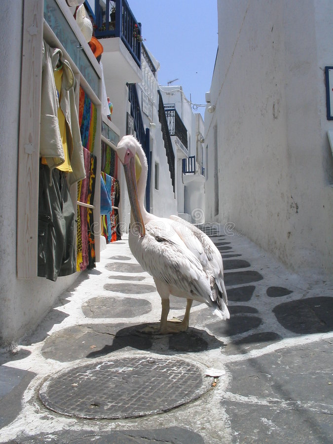 Pelican stroll. Mykonos, Greece. A pelican stops to look over the clothes displayed on a Mykonos Island street royalty free stock images