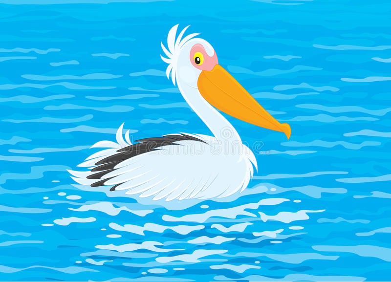 Download Pelican stock vector. Image of clip, aquatic, pelican - 31600556