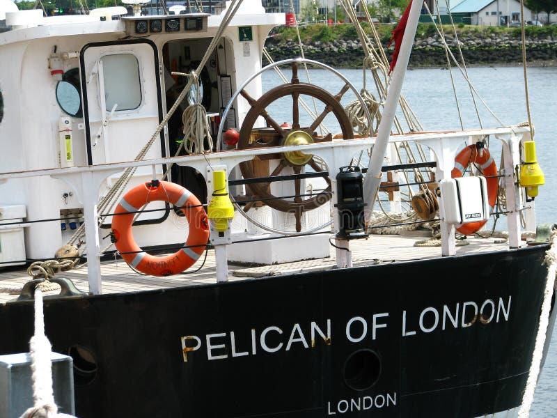Pelicano de Londres imagens de stock
