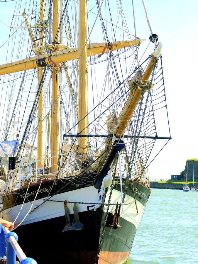 Pelicano de Londres, Weymouth, Dorset. fotografia de stock royalty free