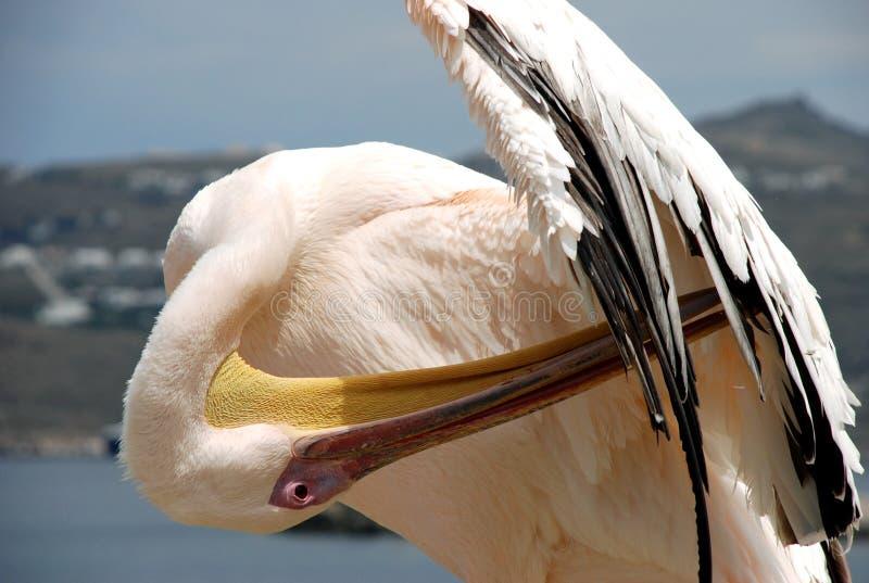 Pelicano de Mykonos imagens de stock royalty free