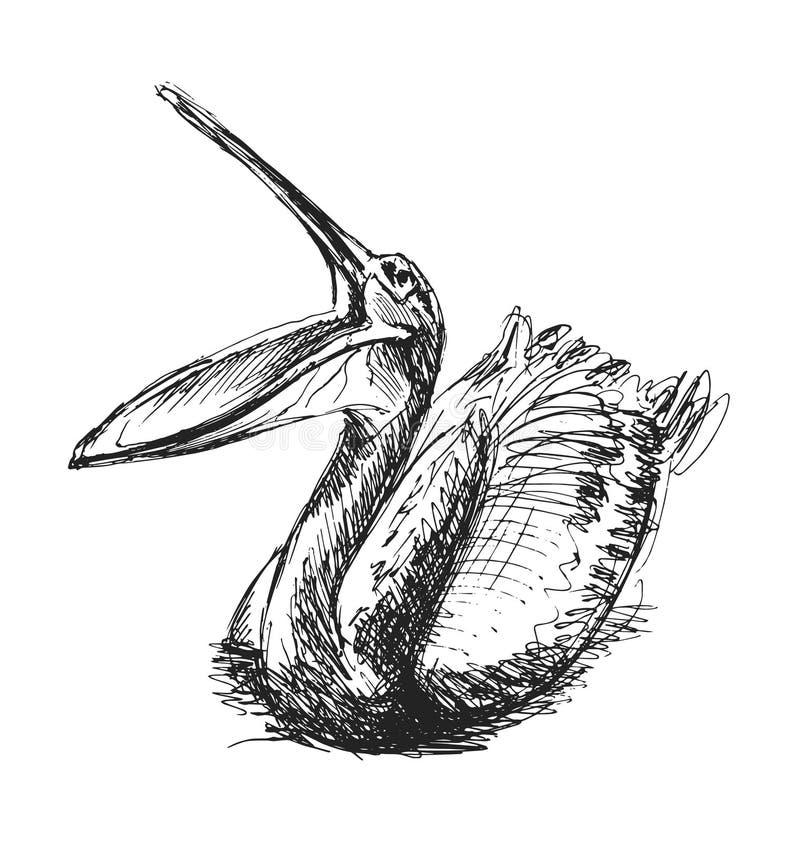 Pelicano do esboço da mão ilustração stock