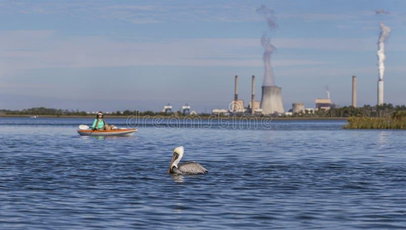 Pelicano e kayaker de Brown com um central elétrica a carvão no fundo imagens de stock