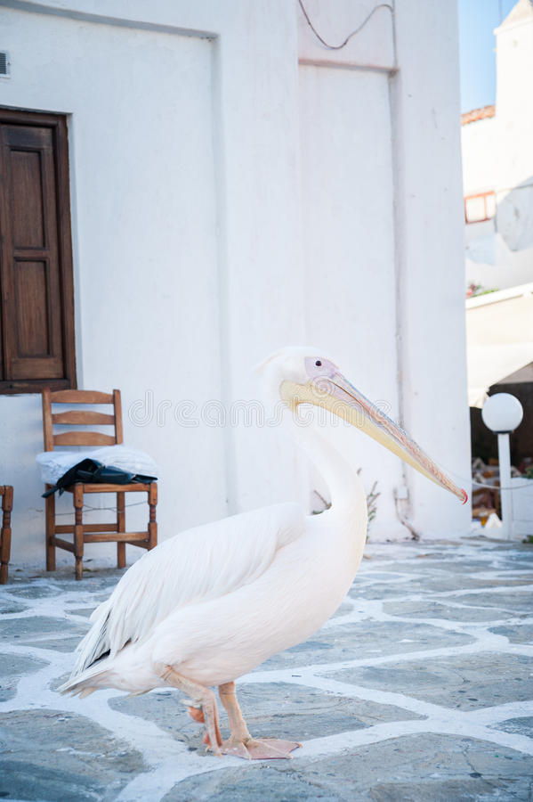 Pelicano em Mykonos fotos de stock