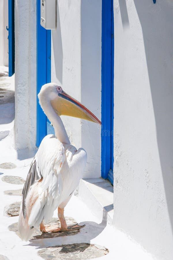 Pelicano na ilha de Mykonos imagens de stock