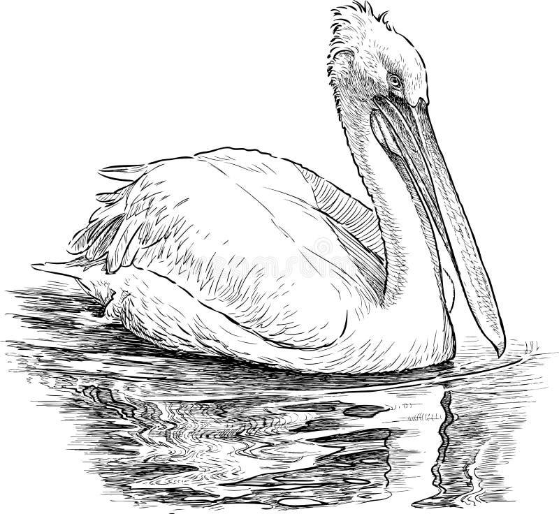 Pelicano no lago ilustração royalty free