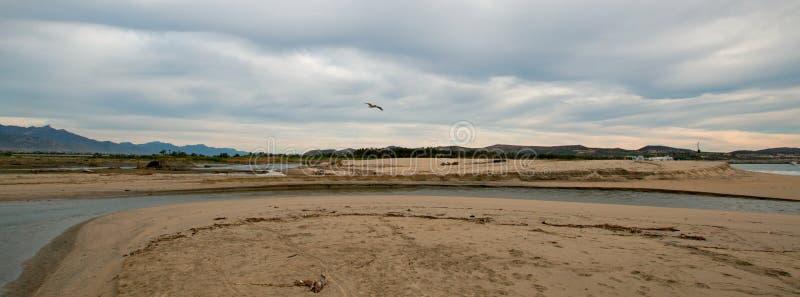 Pelicano que voa sobre a entrada do estuário do molhe do rio em San Jose Del Cabo em Baja California México fotos de stock